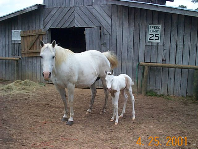 Blue and her filly