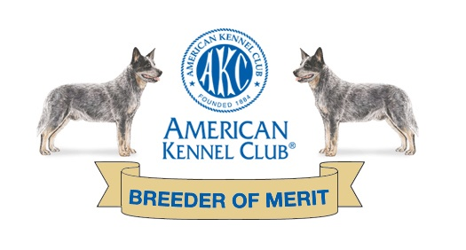 Timber Kennels Current Litter