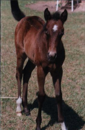 '99 bay filly