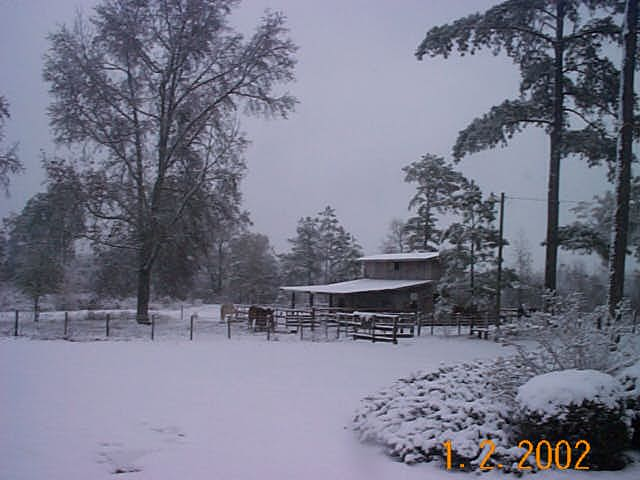 Snow -New Year's 2002